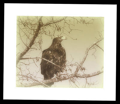 Photograph - Eagle Perch by Kimberly Woyak