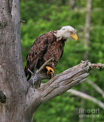 Photograph - Eagle Point Of View by Debbie Stahre