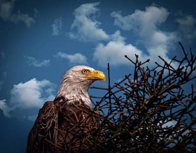 Photograph - Eagle Portrait  by Bill Posner
