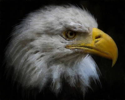 Digital Art - Eagle Profile Right by Ernie Echols