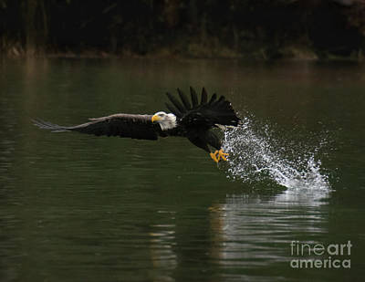 Photograph - Eagle Rising by John Greco