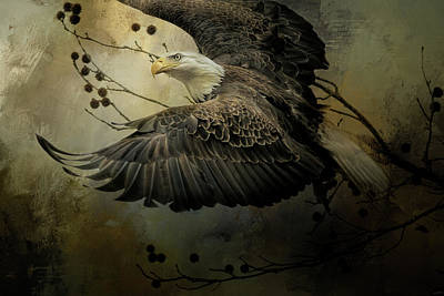 Photograph - Eagle Rising Wildlife Art by Jai Johnson