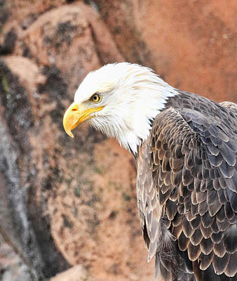 Photograph - Eagle Rock by Steve McKinzie