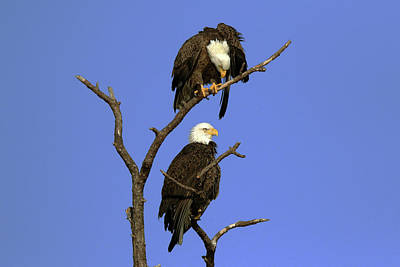 Photograph - Eagle Roost by David Yunker