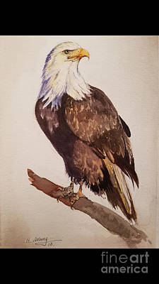 Painting - Eagle  by Rose Wang