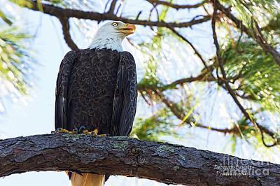 Photograph - Eagle Series My Pose by Deborah Benoit