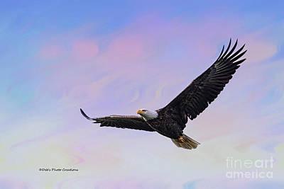 Photograph - Eagle Series Soar Beauty by Deborah Benoit