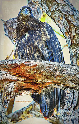 Mixed Media - Eagle Series Tree Baby by Deborah Benoit