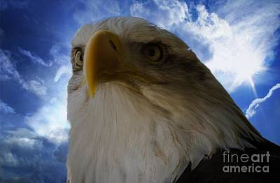 Eagle Art Print by Sherman Perry