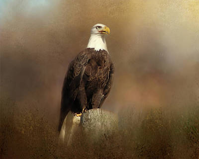 Photograph - Eagle Sighting by TnBackroadsPhotos