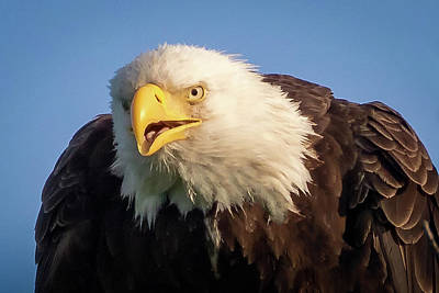 Photograph - Eagle Stare 2 by Allin Sorenson