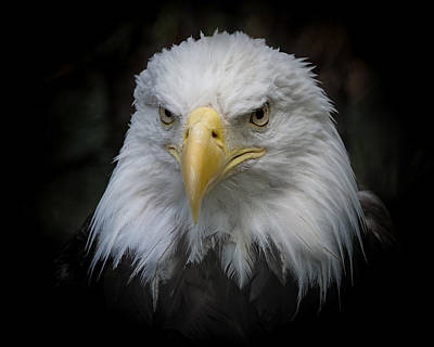 Photograph - Eagle Stare 2 by Ernie Echols