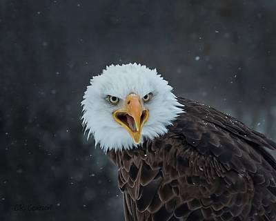 Photograph - Eagle Stare by CR Courson