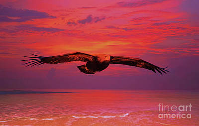 Mixed Media - Eagle Sundown by Deborah Benoit