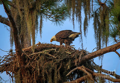 Photograph - Eagle Tending It's Nest by Tom Claud