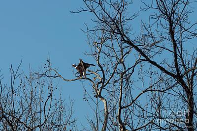Photograph - Eagle Turn Around by Jennifer White