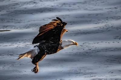 Photograph - Eagle Vesper by Ray Congrove
