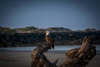 Photograph - Eagle Watch by Bill Posner