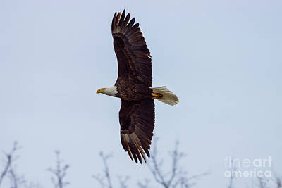 Photograph - Eagle Wing Spread by Jennifer White