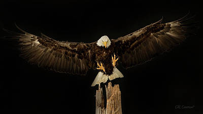 Photograph - Eagle Wingspread by CR Courson