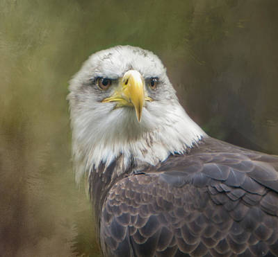 Photograph - Stately Eagle by Marilyn Wilson