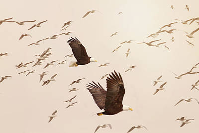 Photograph - Eagles And Flock Of Seagulls by Peggy Collins