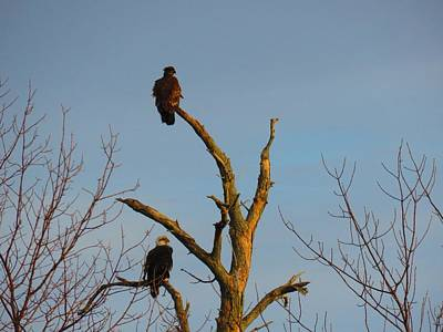 Photograph - Eagles by Dennis McCarthy