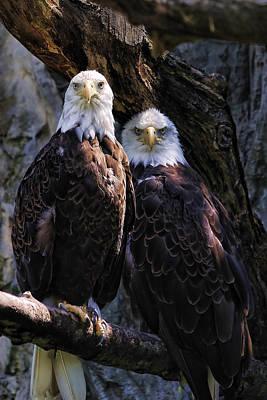 Bird Of Prey Digital Art - Eagles by Edward Sobuta