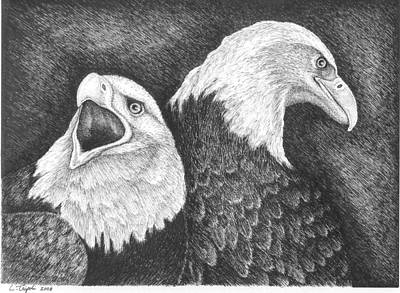 Drawing - Eagles In Ink by Lawrence Tripoli