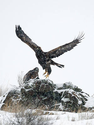Winter Storm Photograph - Eagles In The Storm by Mike Dawson