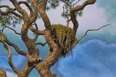 Photograph - Eagles Nest In Pine Tree by Richard Goldman