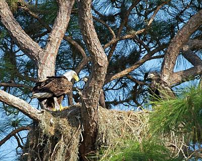 Photograph - Eagle's Nest  by Ronald Lutz
