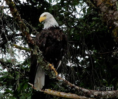 Photograph - Eagles Of Alaska 2 by Lennie Malvone
