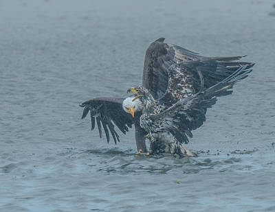 Photograph - Eagles Of Juneau 1 by Patricia Dennis