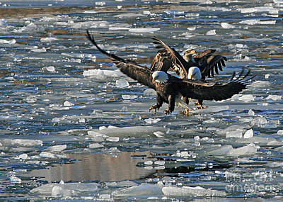 Eagles On Ice Art Print
