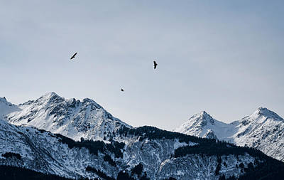 Photograph - Eagles Over Mountains by Michele Cornelius