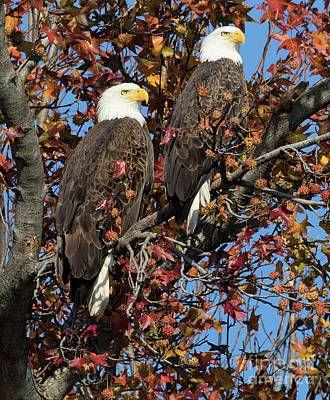 Photograph - Eagles View by Art Cole