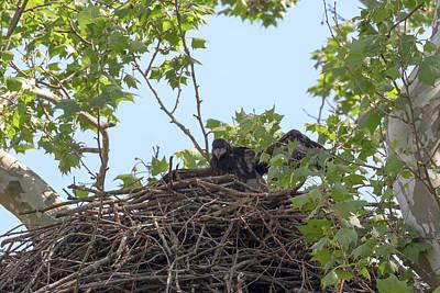 Photograph - Eaglet Practicing Maneuvers 13 by Susan Rissi Tregoning