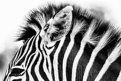 Photograph - Ear Of Zebra by Petrus Bester