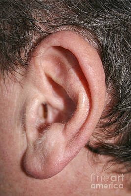 ear Art Print