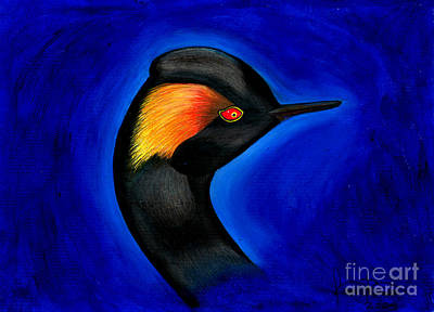 Eared Grebe Duck Art Print