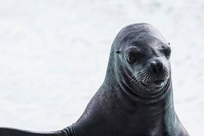 Earless Seal Art Print by Happy Home Artistry