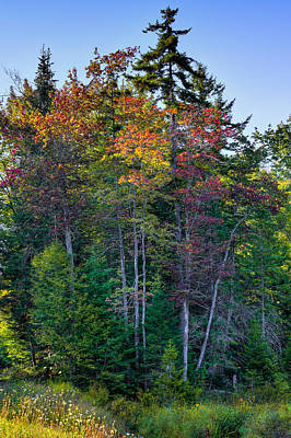 Photograph - Early Autumn Color On Rondaxe Road by David Patterson