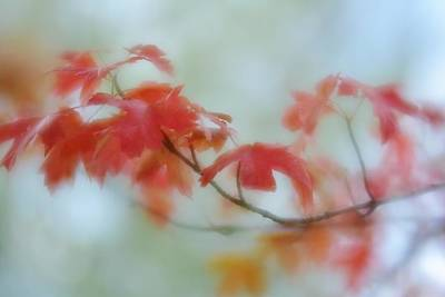 Photograph - Early Autumn by Diane Alexander