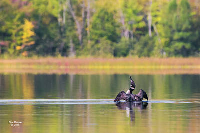 Photograph - Early Autumn Loon by Peg Runyan
