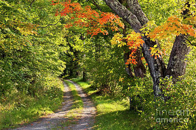 Photograph - Early Autumn Trail by Alan L Graham
