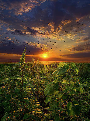 Photograph - Early Bird Special by Phil Koch