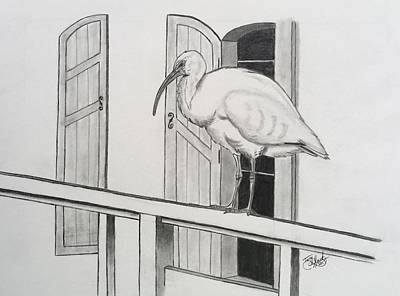 Drawing - Early Bird by Tony Clark