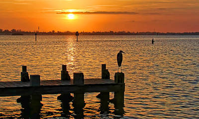 Photograph - Early Birds by HH Photography of Florida