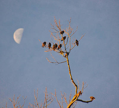 Photograph - Early Birds by Linda Brown